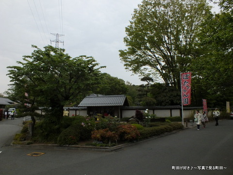 20130420098町田ぼたん園