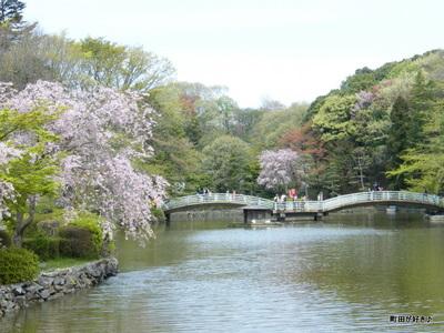 20100418136シダレザクラ(枝垂桜)