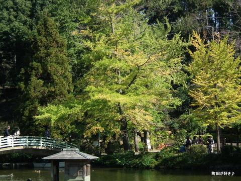20111029046色付き始めた薬師池公園