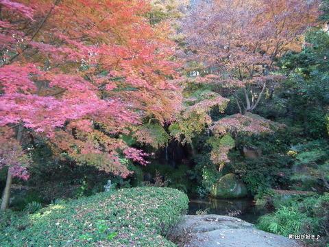 20101204059紅葉の薬師池公園
