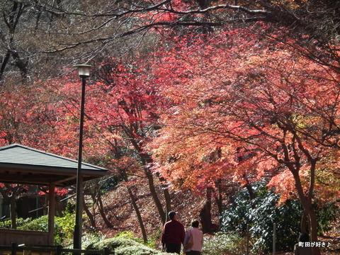 20101204045紅葉の薬師池公園