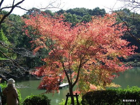 2010110345秋の薬師池公園