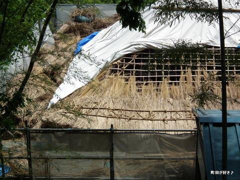 20110514054茅葺屋根の葺き替え@薬師池公園