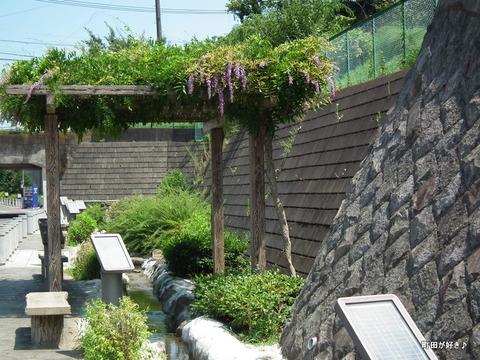 2011071607藤の花@なかよし散歩道