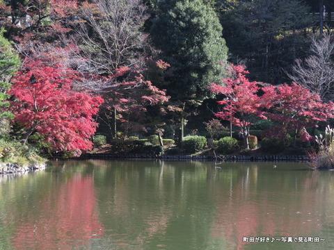 20131116052薬師池公園の紅葉