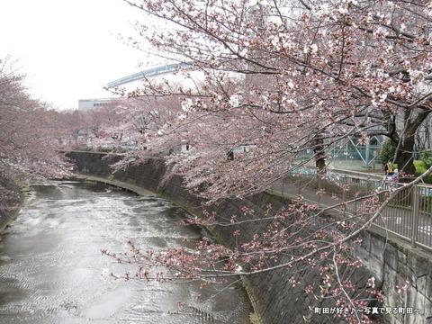 2015032819恩田川の桜並木