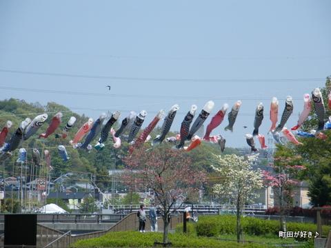 20100425093平成22年第7回鶴見川泳げ鯉のぼり