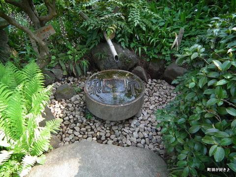 20110508097薬師池公園・萬葉草花苑