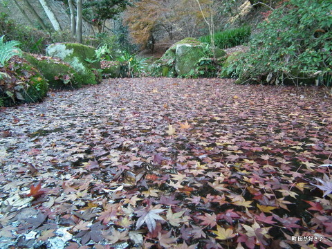 2011121159紅葉と野鳥@薬師池公園