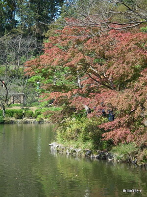 20111029040色付き始めた薬師池公園