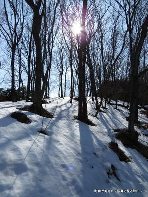 20140222006雪と梅の花@薬師池公園