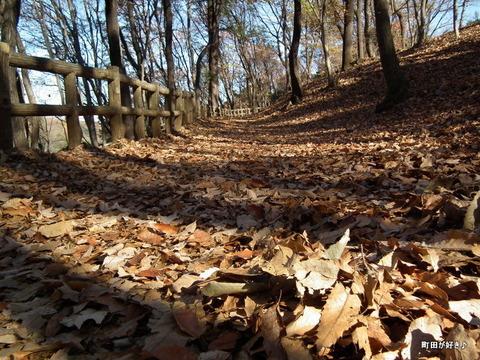 2010121113薬師池公園落ち葉