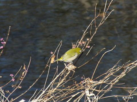 2013011222謎の鳥はメジロ・・・@恩田川