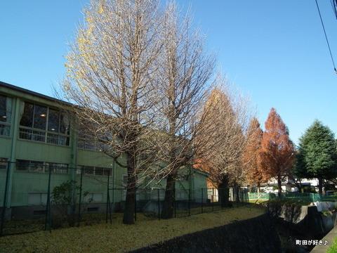 2010121109これも紅葉?秋の空