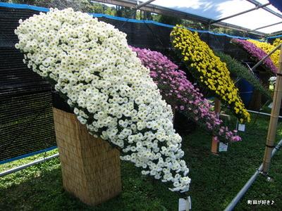 20091103051 第16回町田市菊花展
