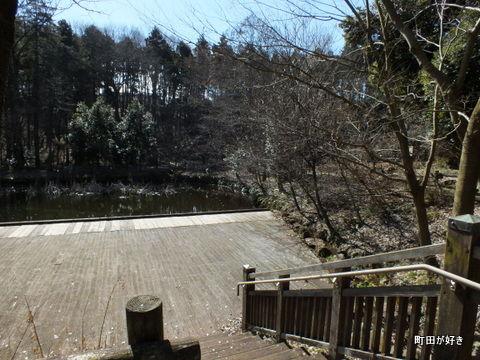 20130216042忠生公園でもカワセミ