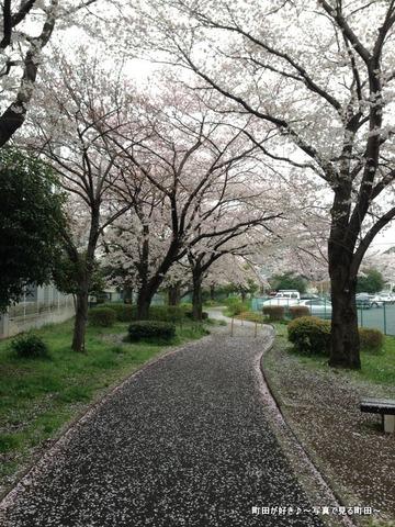 20130331068弁天橋公園のサクラが綺麗でした