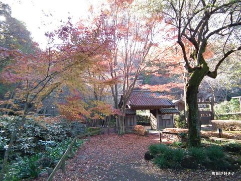 2011121128紅葉と野鳥@薬師池公園