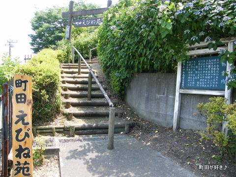 20100612180町田えびね苑<アジサイ>