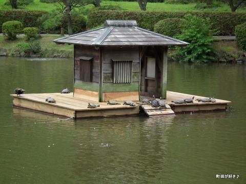 2012071442カメのお宿がリフォーム@薬師池公園