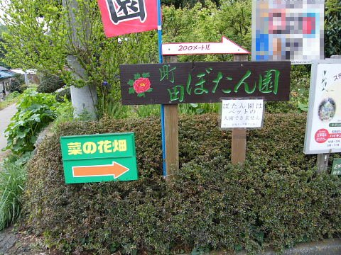 20090418012.jpg 町田ぼたん園