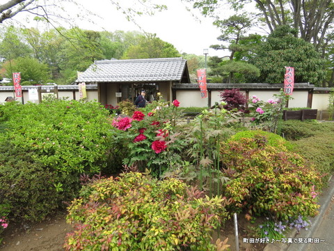 20140419103町田ぼたん園