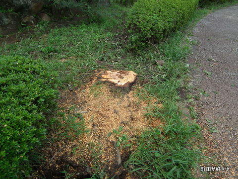 2011092324薬師池公園