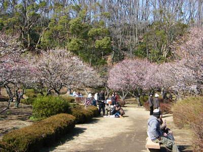 20090221052.jpg 薬師池公園の梅の花が見頃です