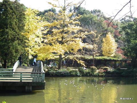 2011112033イチョウ紅葉@薬師池公園