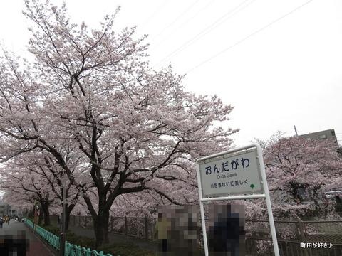 20160402144恩田川の桜