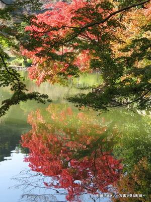 20131116155薬師池公園の紅葉