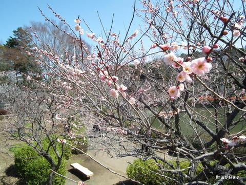 20110313052薬師池公園・梅園