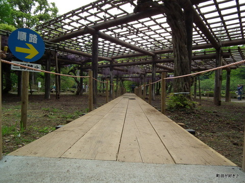 2011050628薬師池公園の六尺フジ