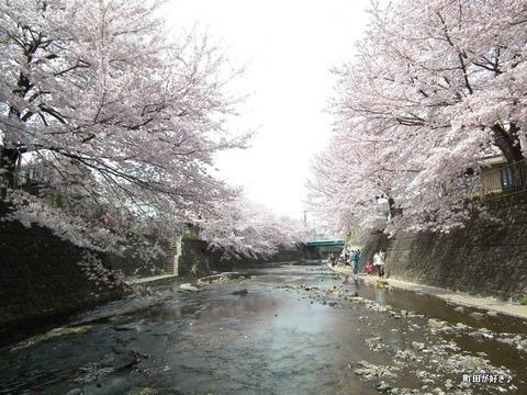 20110410155恩田川・高瀬橋の桜
