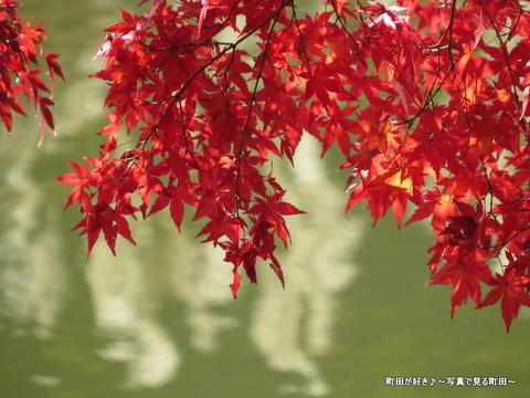 20131116041薬師池公園の紅葉