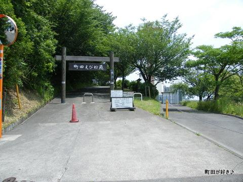 20100612056町田えびね苑<アジサイ>