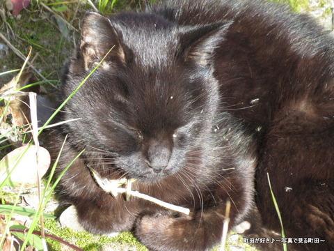 2013120113こんなところに黒猫!@恩田川