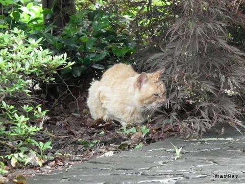 20120617006猫 ネコ ねこ