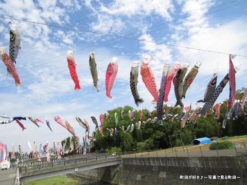 20140428031鶴見川泳げ鯉のぼり