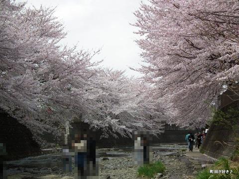 20110410170恩田川・高瀬橋の桜