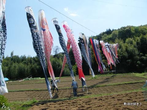 20100425034平成22年第7回鶴見川泳げ鯉のぼり