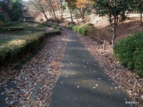 2010121119薬師池公園落ち葉