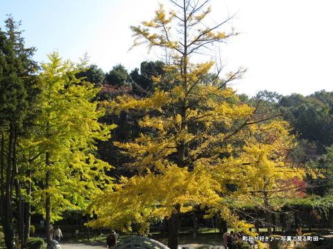 20131116048薬師池公園