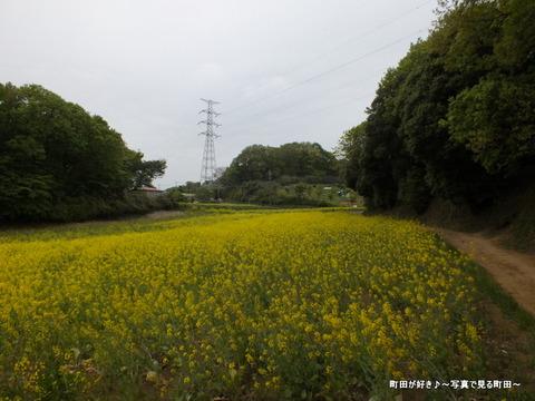 20130420088七国山の菜の花