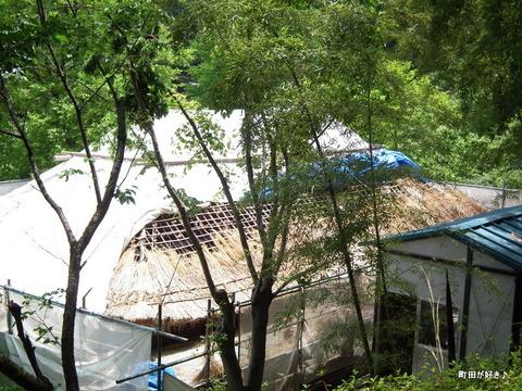 20110514058茅葺屋根の葺き替え@薬師池公園