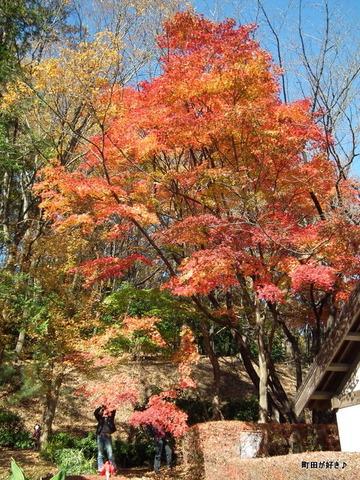 20101204079紅葉の薬師池公園