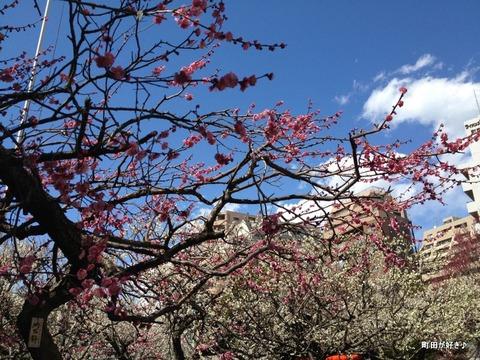 2012032532町田天満宮の梅