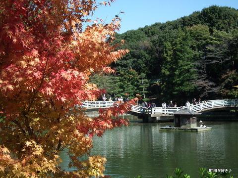 2010110351秋の薬師池公園