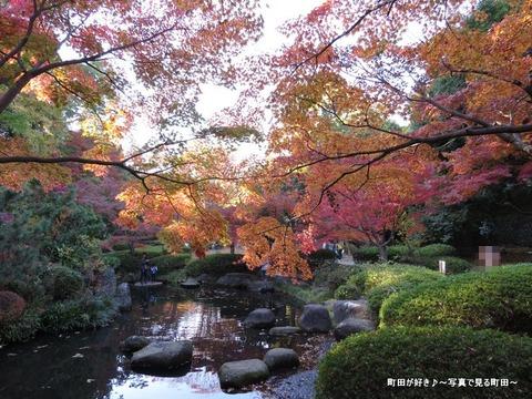 2013112425芹ヶ谷公園の不思議な紅葉