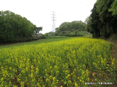 20140419091七国山の菜の花畑